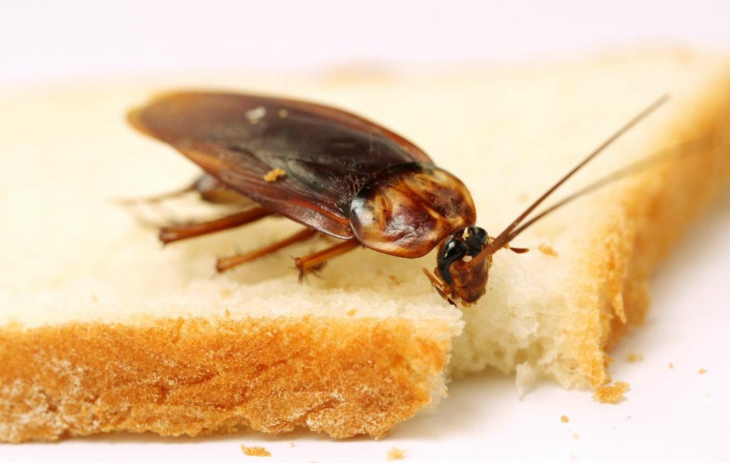 Insecten In Spanje