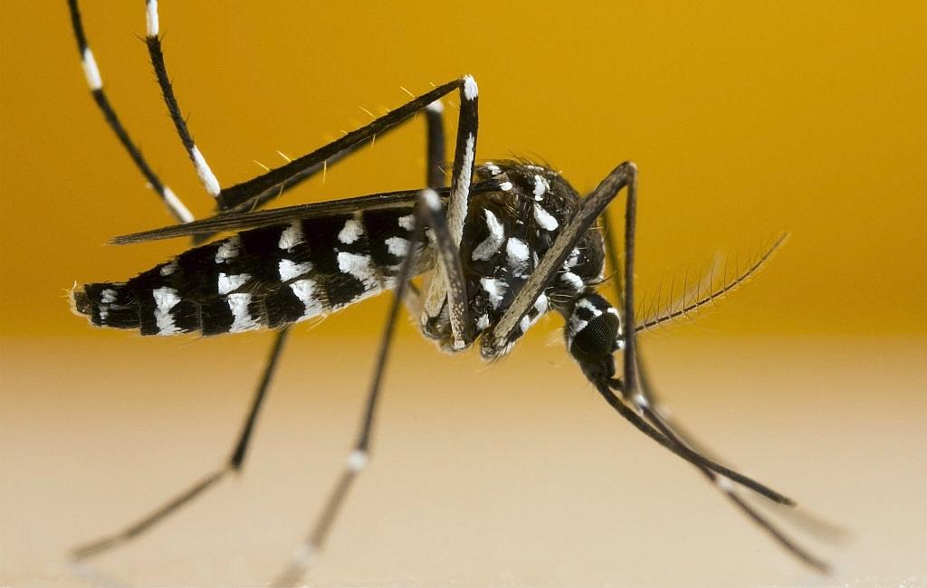 Tijgermuggen in Spanje