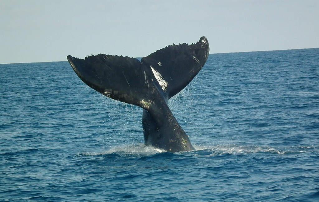 Waar Kun Je Walvissen Kijken In Spanje