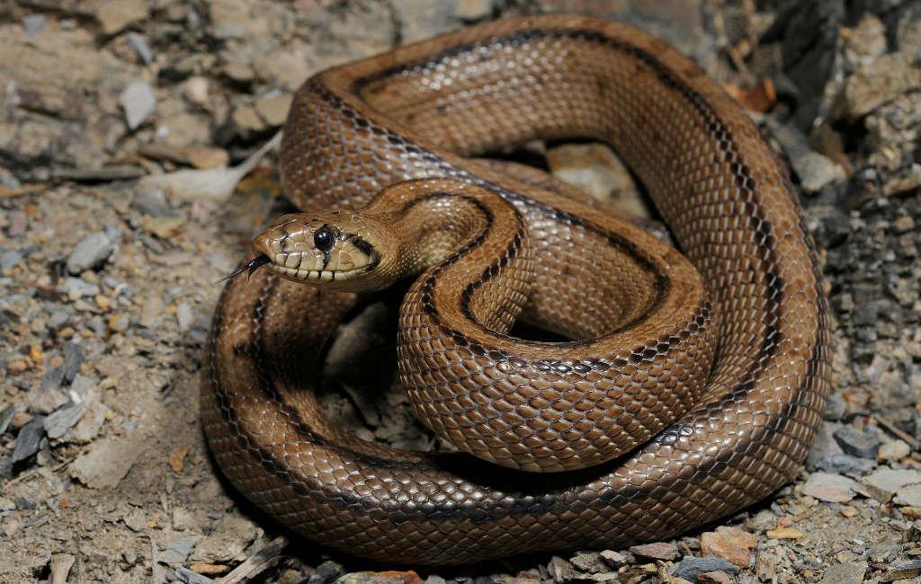 Slangen In Spanje