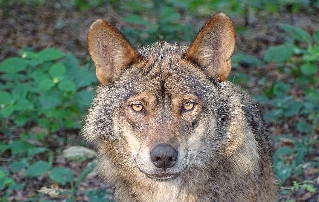 Bedreigde diersoorten in Spanje