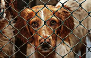 Aantal in de steek gelaten honden en katten in Spanje