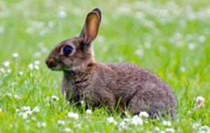 Spanje is het land van de konijnen